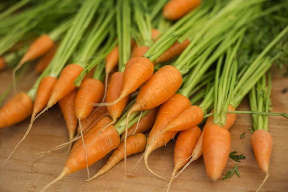 Chantenay Carrot Varieties
