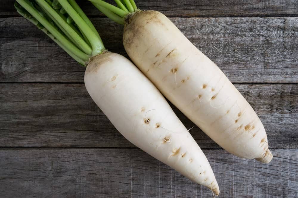 Daikon Long White Radishes
