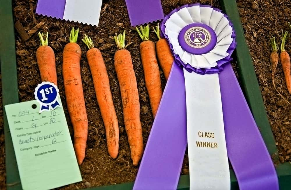 Imperator carrot varieties joined in a contest.