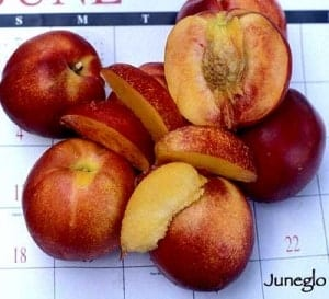 June Glo Nectarine