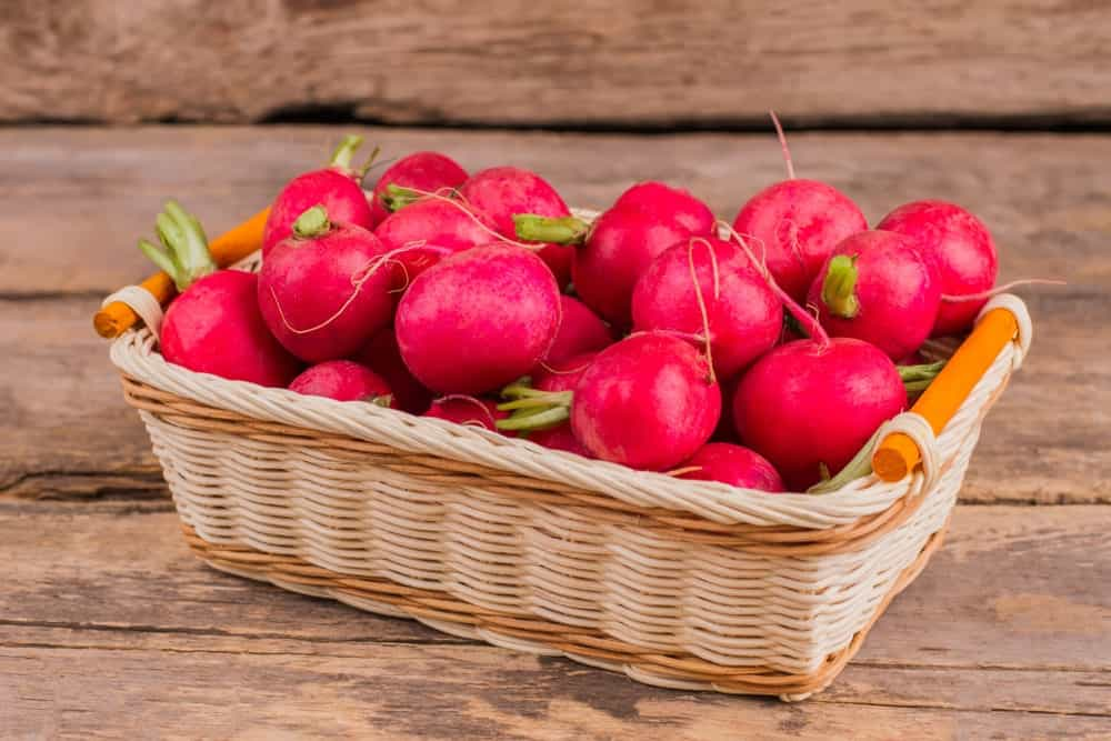 Pink Beauty Radishes