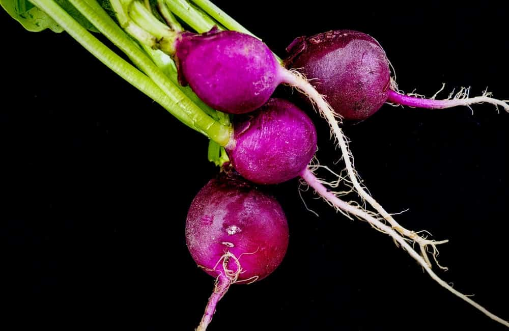 Purple Plum Radishes