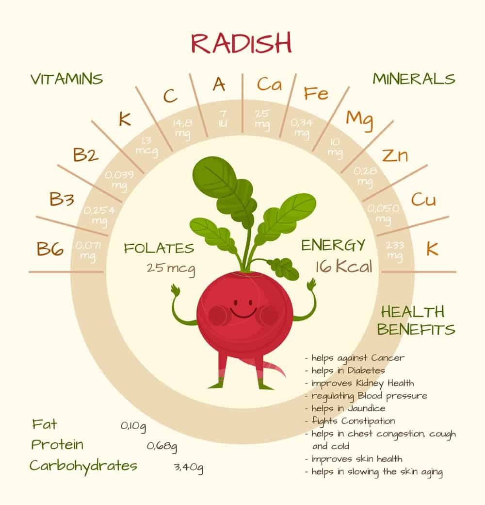 Radish Nutrition Facts Chart