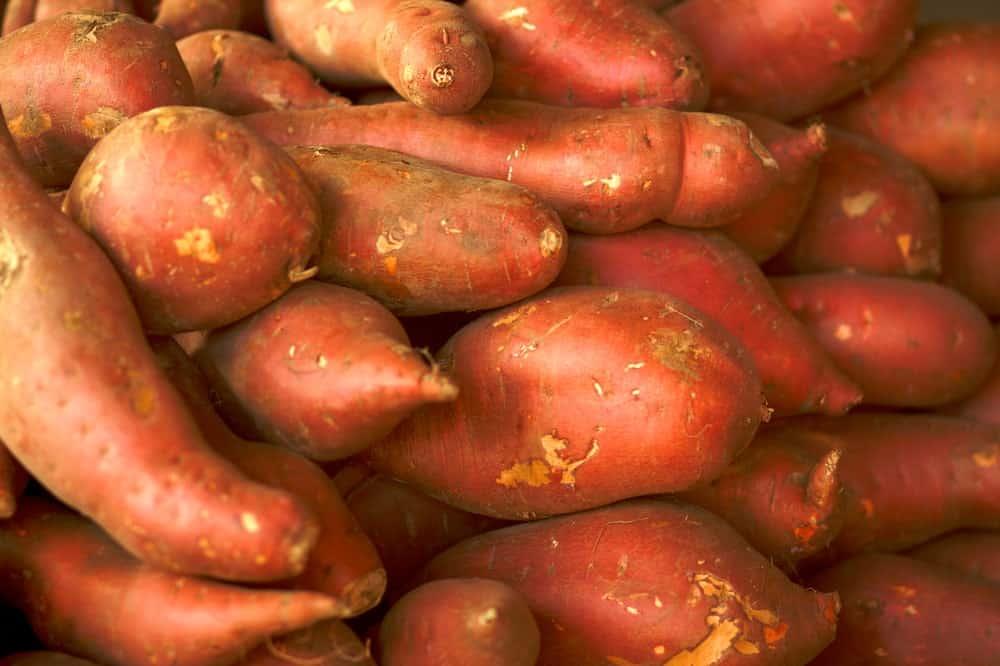 Red Garnet Sweet Potatoes