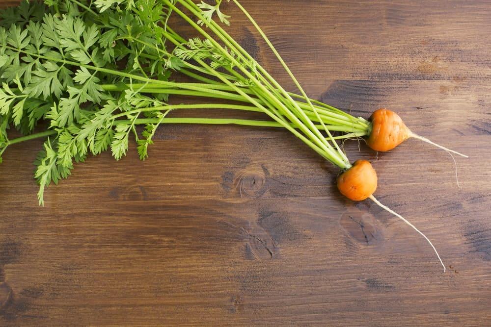 Romeo carrots