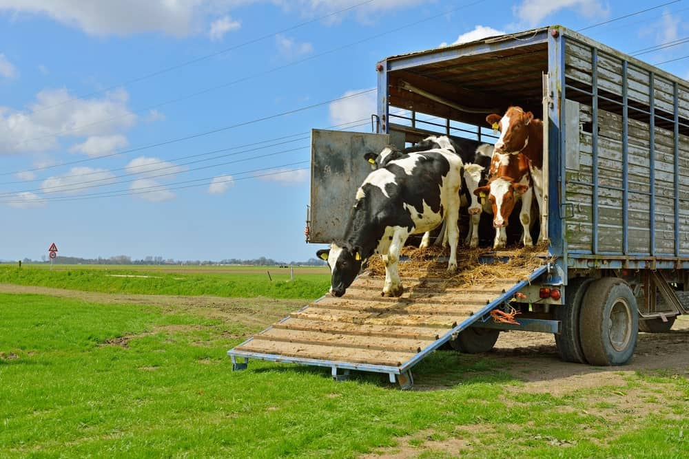 Livestock lorry