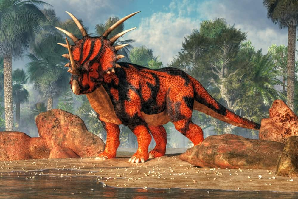 Red and black Styracosaurus