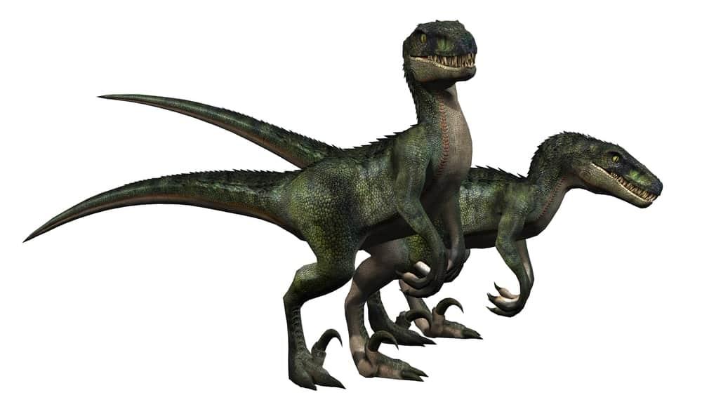 Raptor dinosaurs