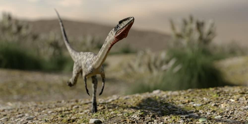 Coelophysis dinosaur