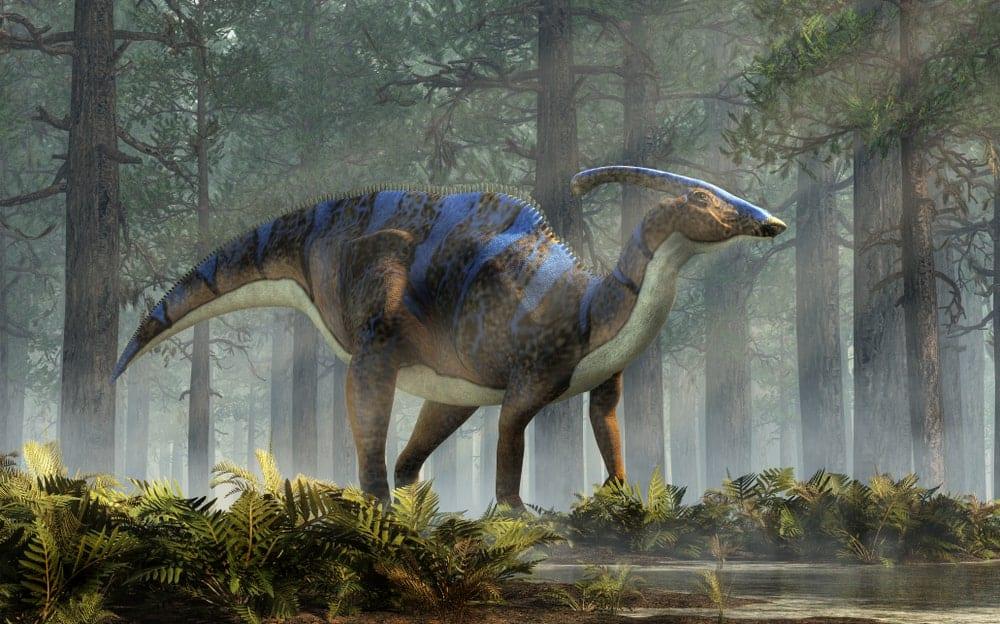 Parasaurolophus dinosaur