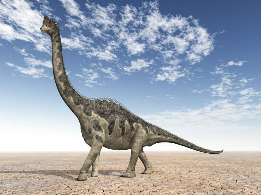 Europasaurus dinosaur