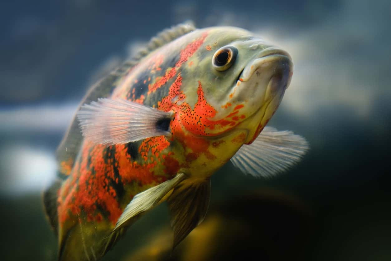 41 Types Of Fish Most Popular Saltwater And Freshwater Fish