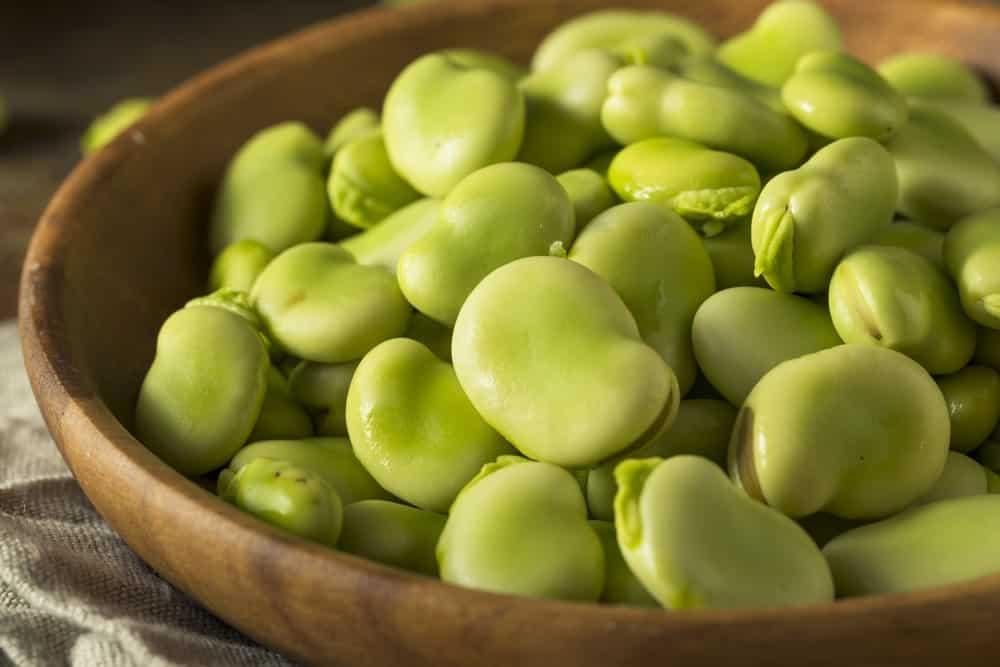 Fresh Green Fava Beans