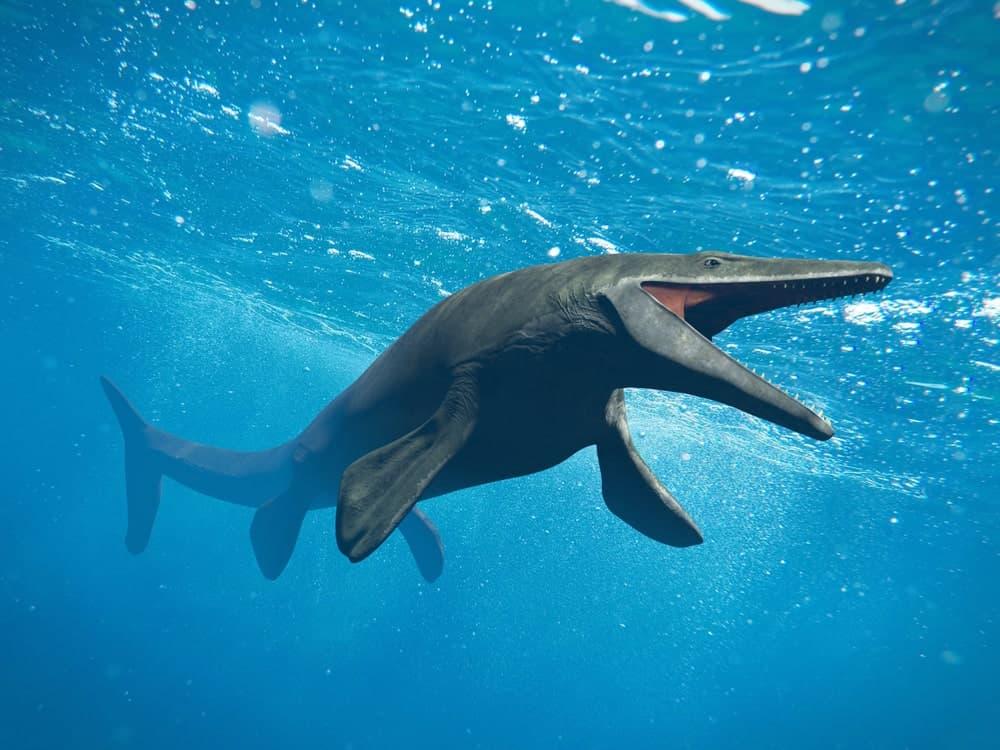 Mosasaurus fish