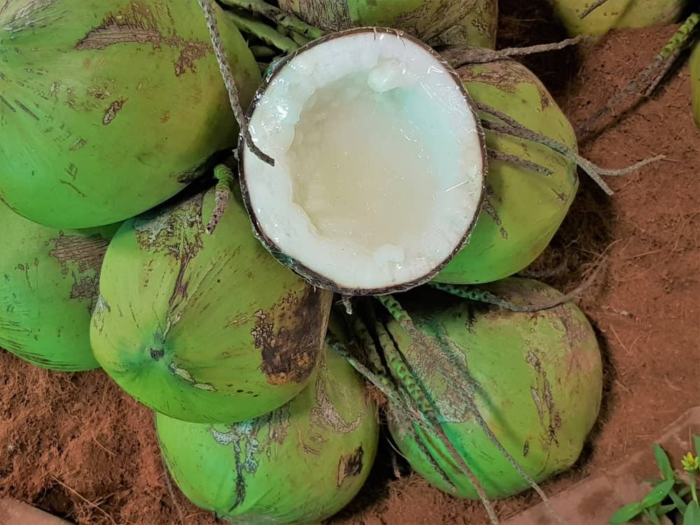 A bunch of Macapuno Coconuts