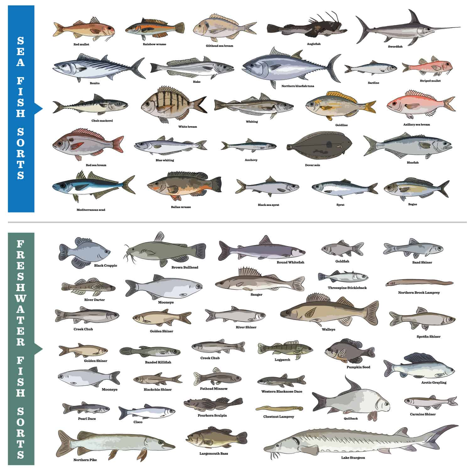 Types of saltwater and freshwater fish chart