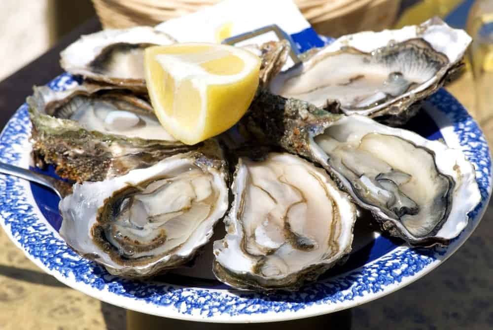 Oysters from the Atlantic Coast
