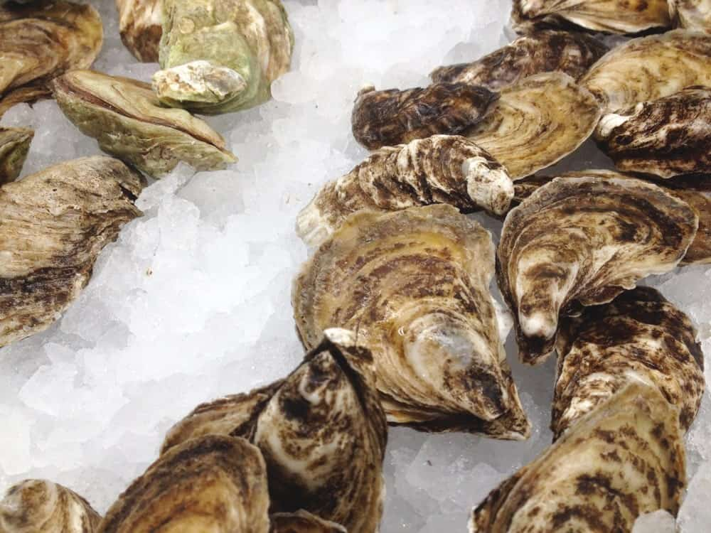 Fresh Beausoleil Oysters on Ice