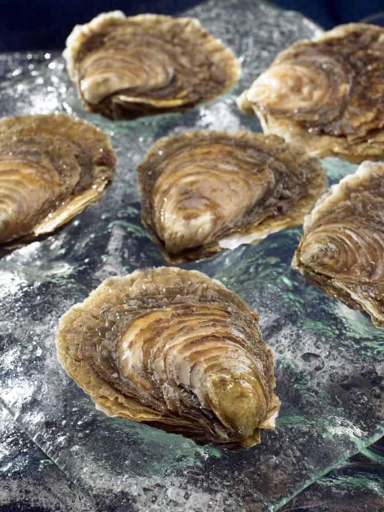 Flat Belon Oysters