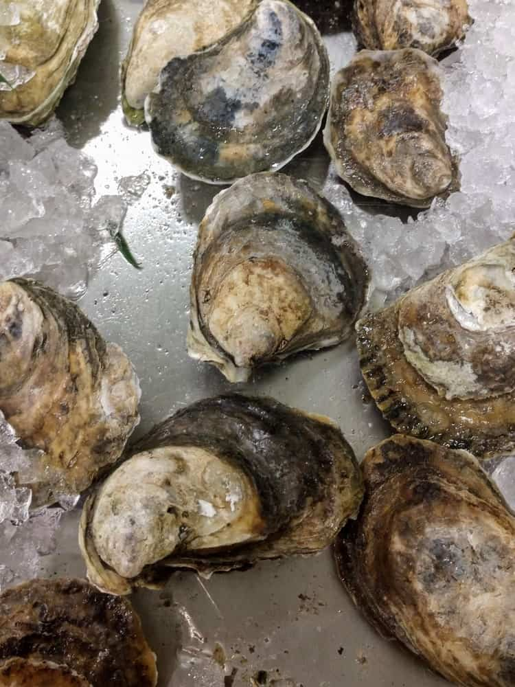 Fresh Connecticut Blue Point Oysters