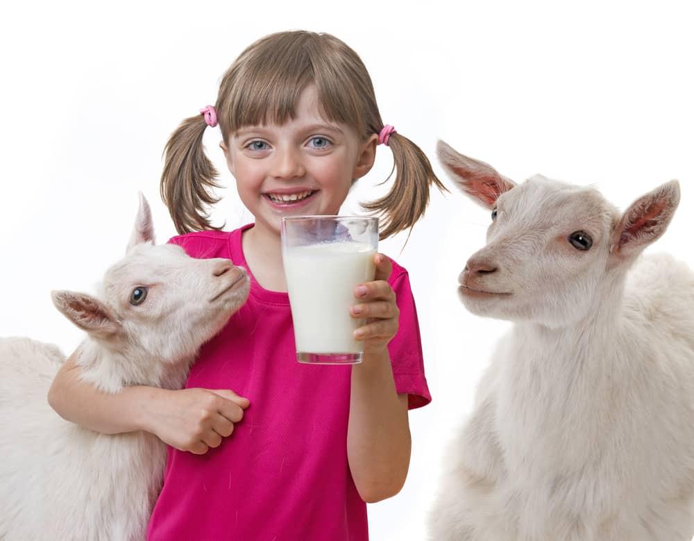 Girl Drinking Goat Milk