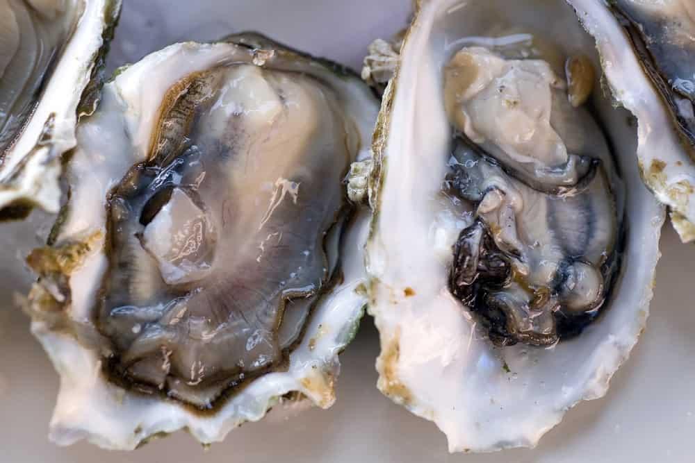 Fresh Half-Shell Oysters
