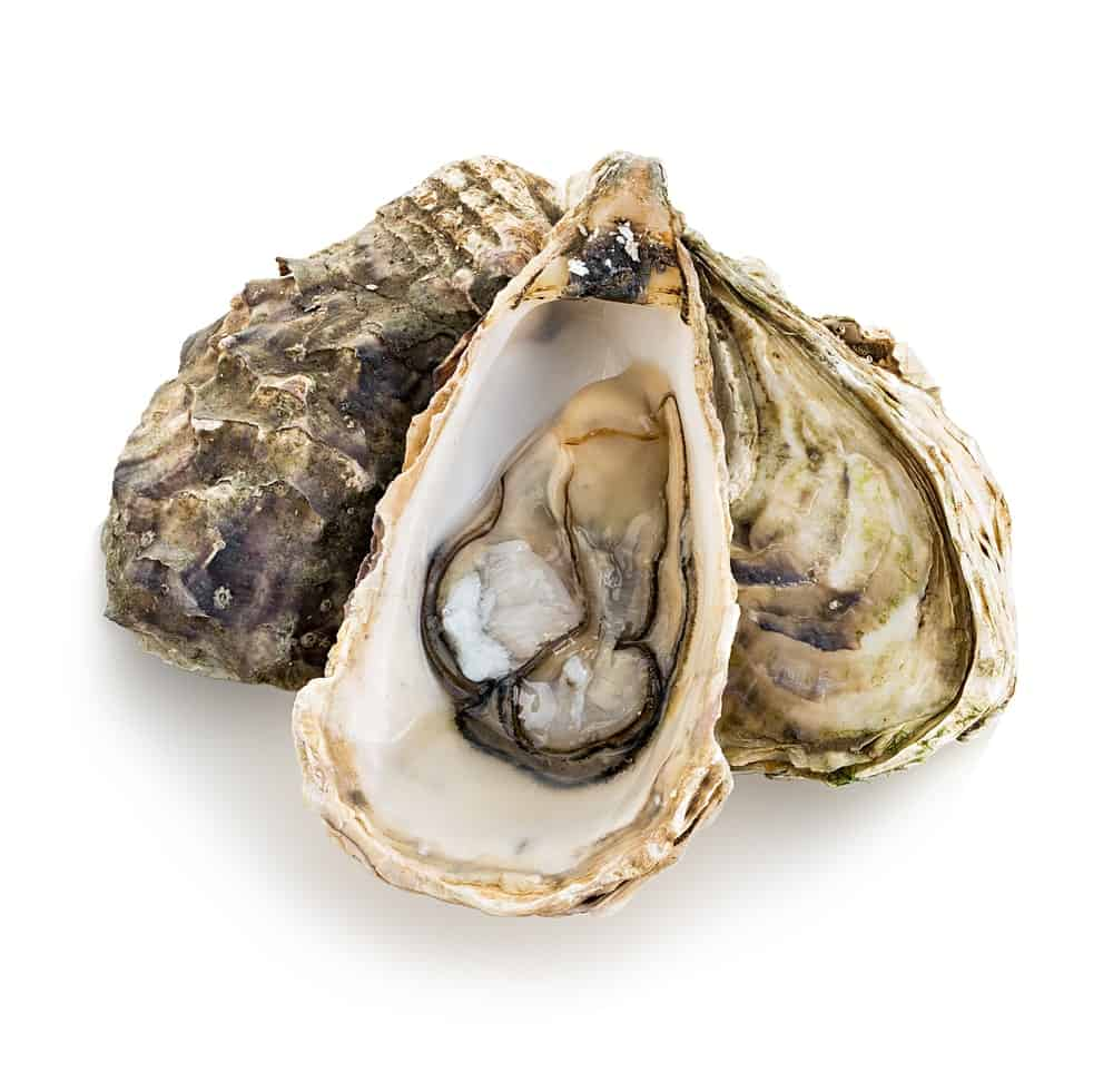 A Bunch of Pacific Oysters