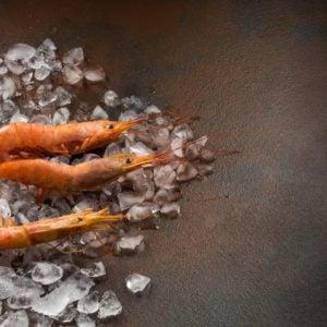 Different types of shrimp