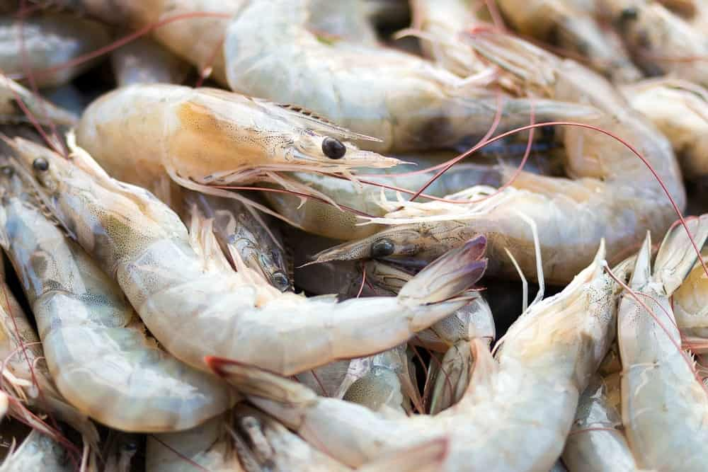 Raw white shrimps
