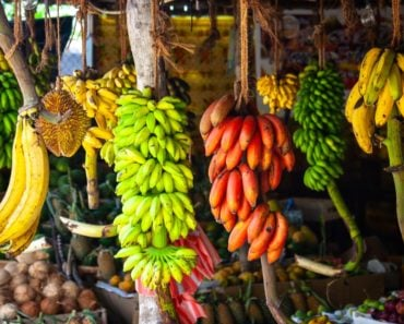 A display of different types of bananas.