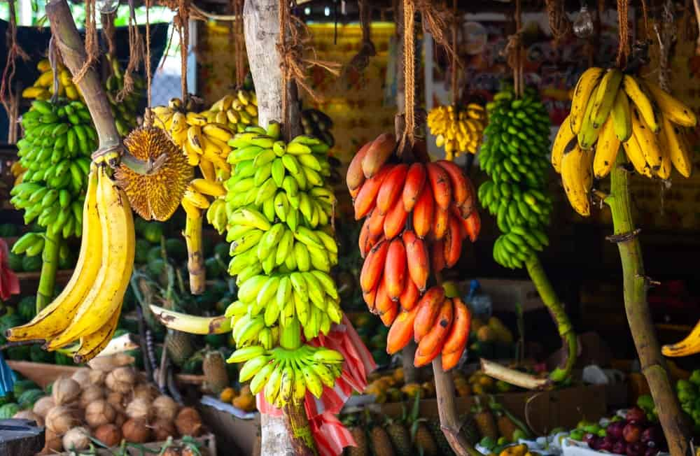 13 Different Types Of Bananas