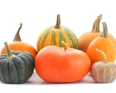 different types of squash