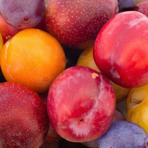 Different types of plums