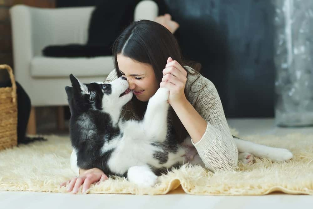 Dog playfully biting the woman's nose.