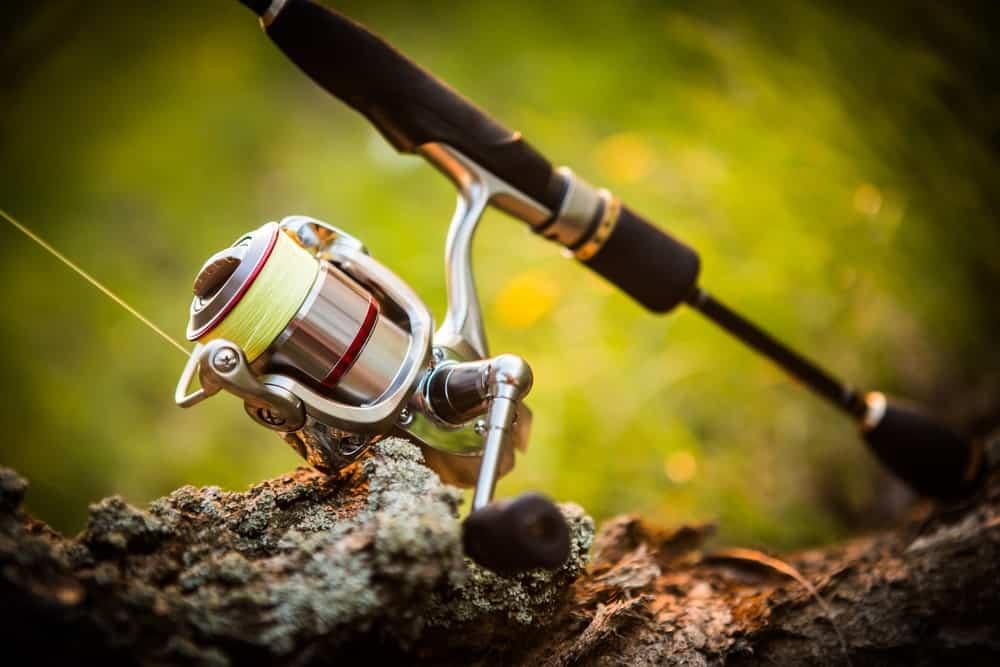 Fishing Reel on a Rock