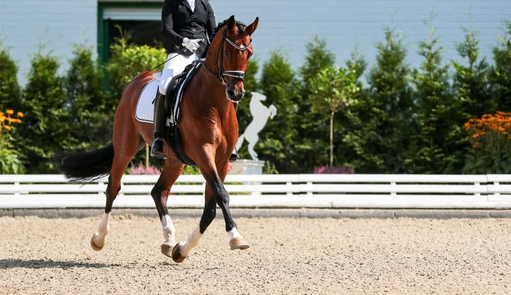 Dressage events