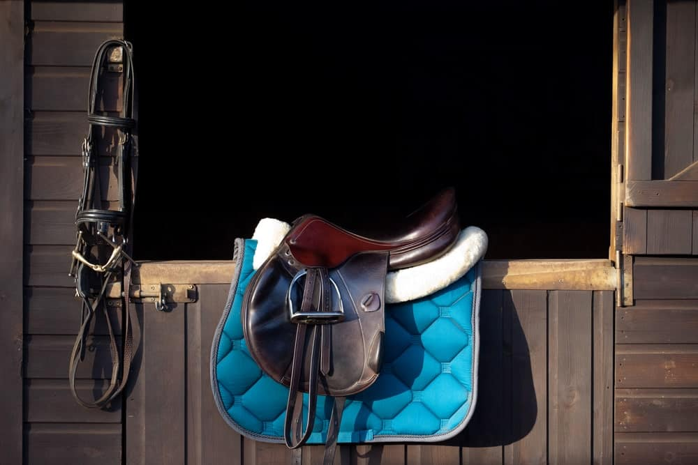 English saddle and bridle