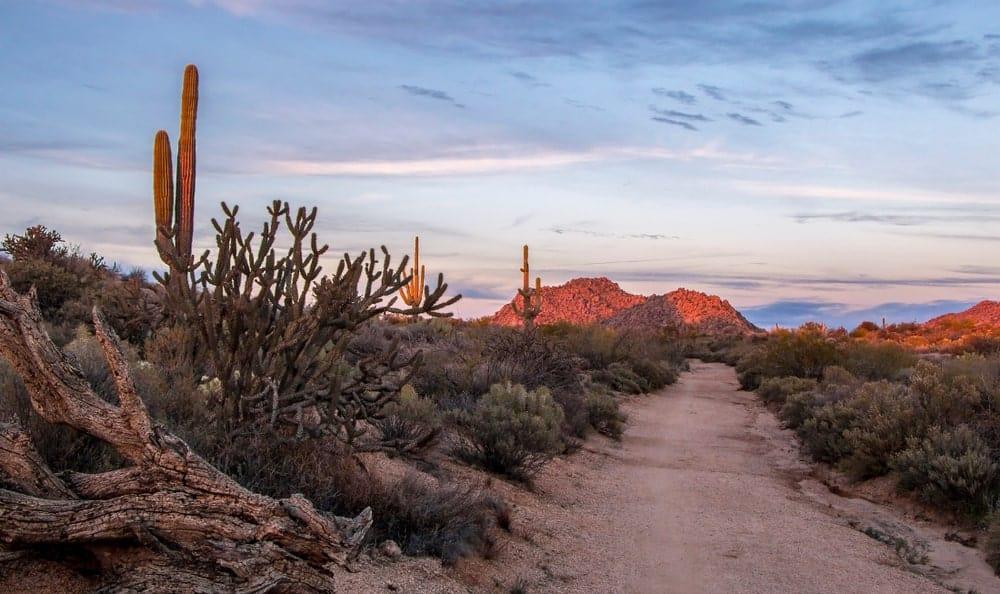 A road in the Arizona desert.