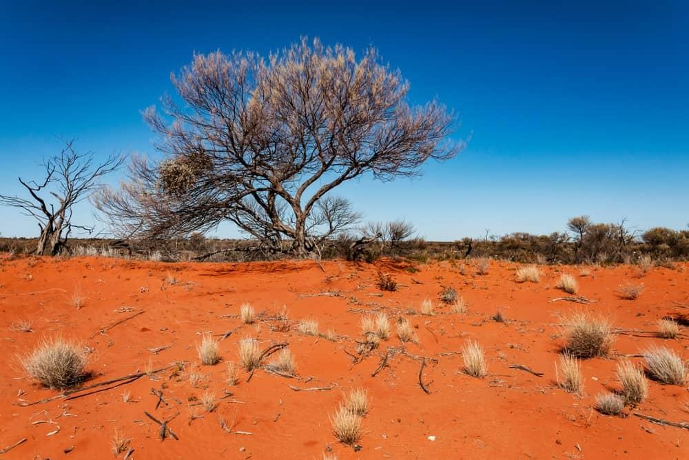 Landscape of the Australian outback.