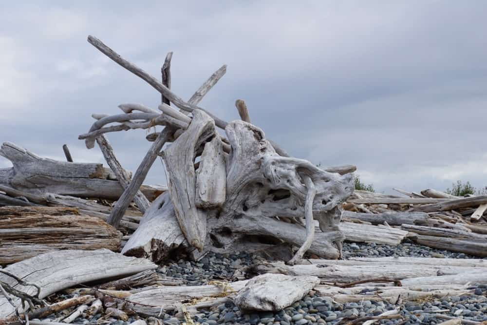 Driftwood on the sea coast of Whidbey Island.