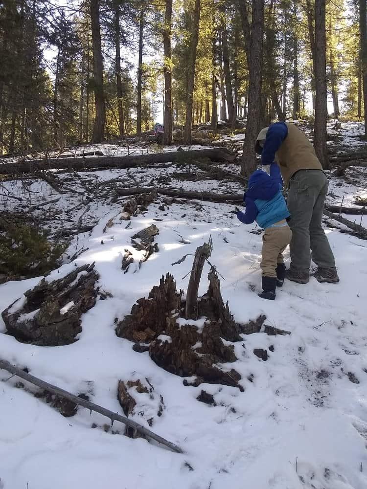 Cut Down a Christmas Tree