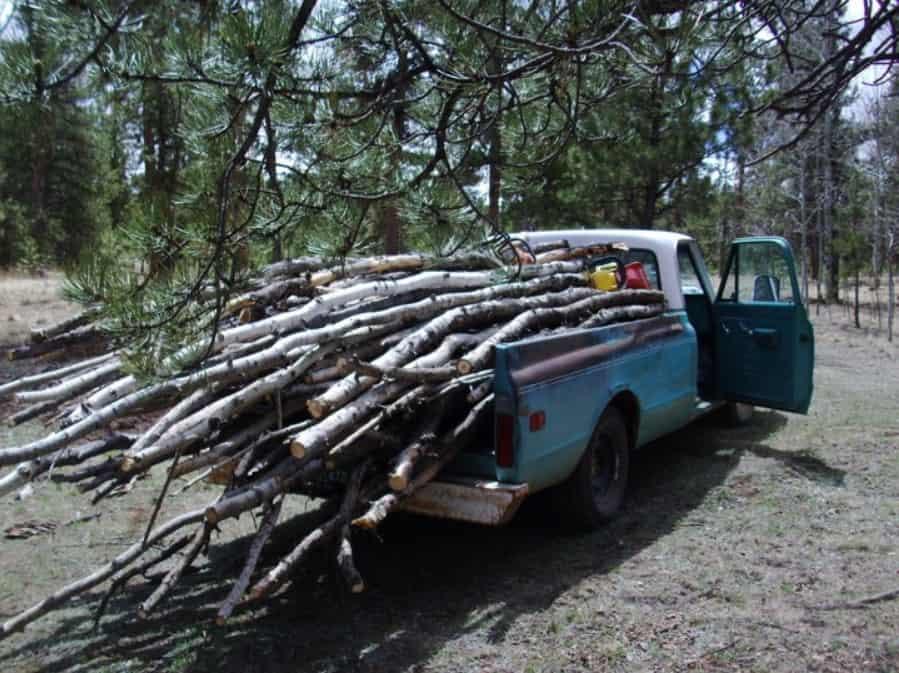 Cut/Gather Firewood
