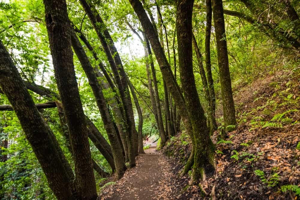 Saratoga Woods hiking trail