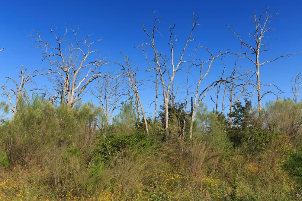 Almost a decade ago, the worst wildfire in the history of Texas happened in Bastrop County. Here's a look at some burned trees still standing after almost 10 years.