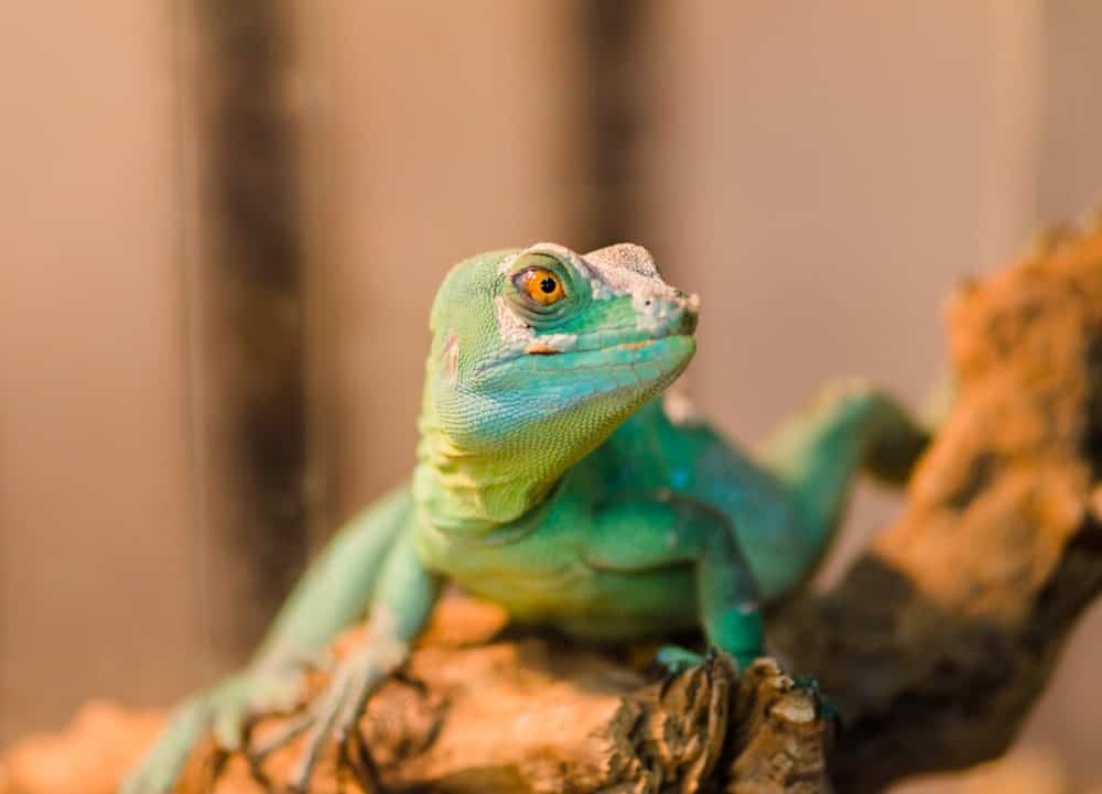 The Texas Reptile Zoo is one of the most popular attractions in the county. They showcase over 150 types of reptiles from around the globe.