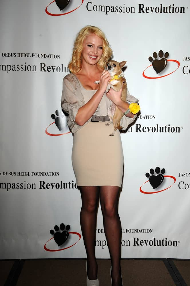 Katherine Heigl with a cute pup at a Press Conference For JDHF Animal Advocacy.