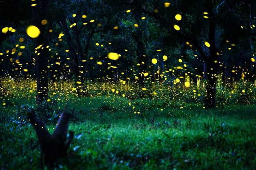 This is a close look at a nighttime forest with fireflies.