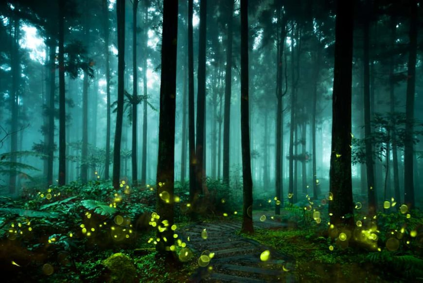 This is a pathway through a forest filled with fireflies.
