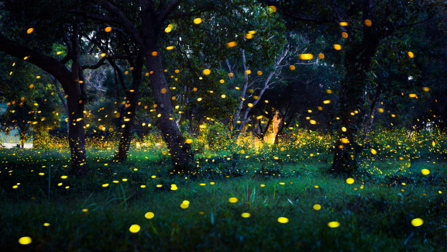 This is a close look at a forest filled with fireflies at night.
